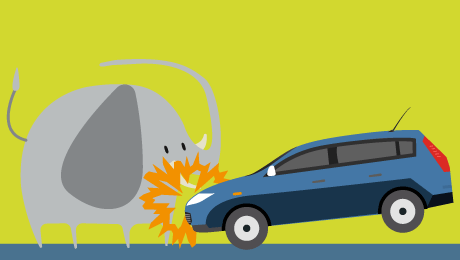 Assurance auto : collision avec un animal sauvage, quelle indemnisation ?